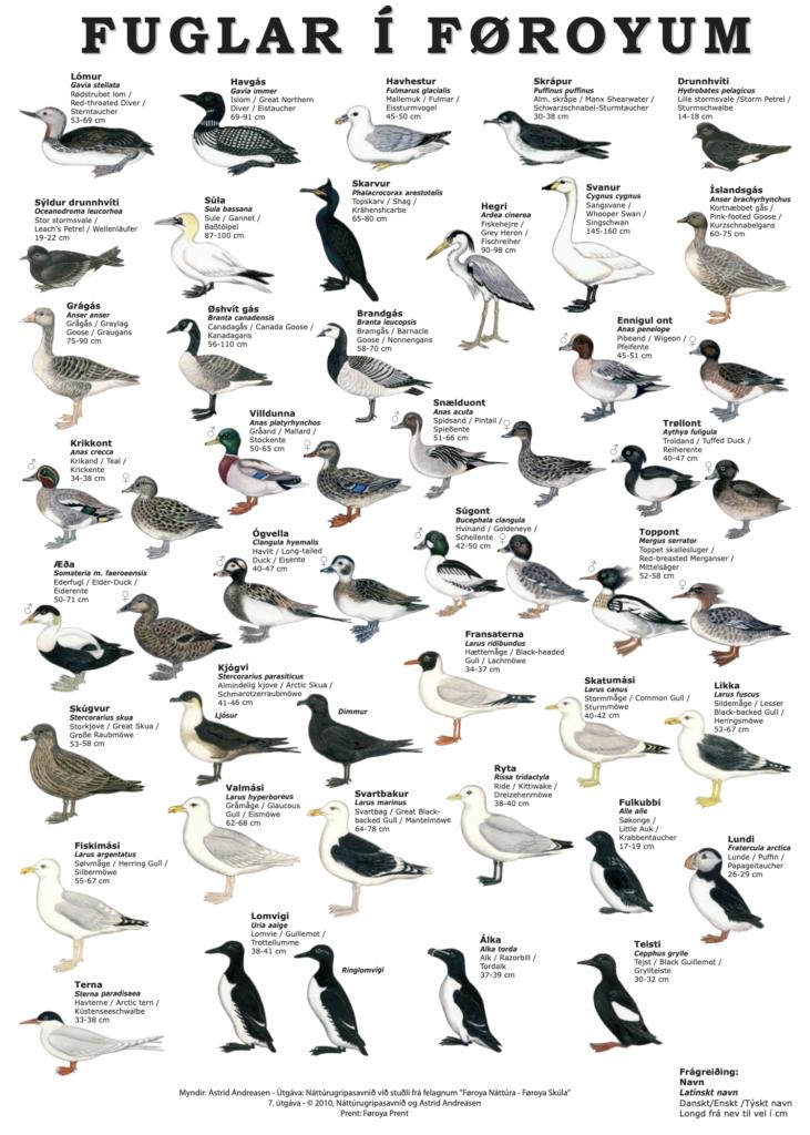 Birds of the Faroe Islands